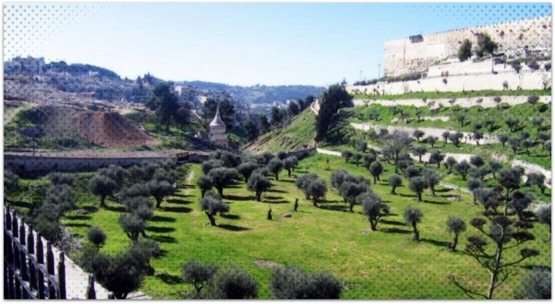 Garden of Gethsemane.-001