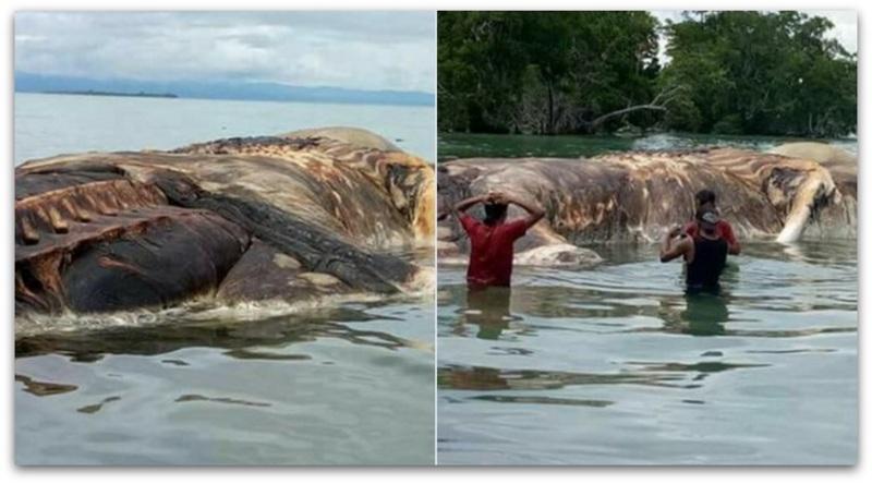 Најверојатно откриена мистеријата за насукано морско суштество во Индонезија   Видео