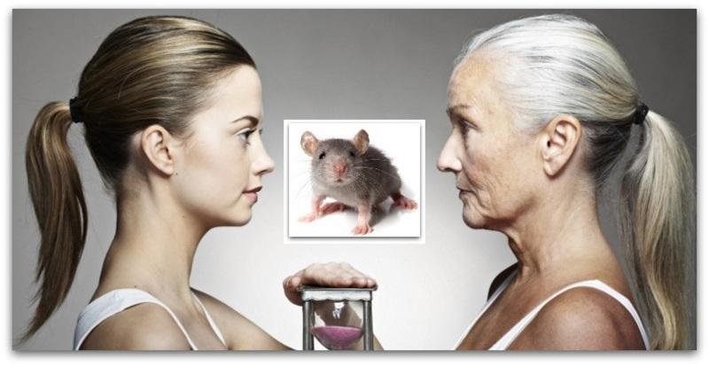 Глувците можат да го запрат стареењето  можат ли и луѓето